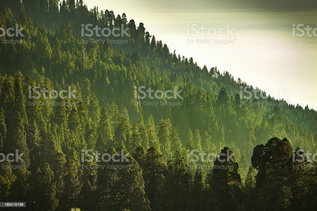 Mist on the Sierra Nevada Mountains stock photo