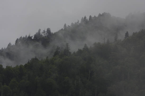 Mist on the Smokey Mountains stock photo