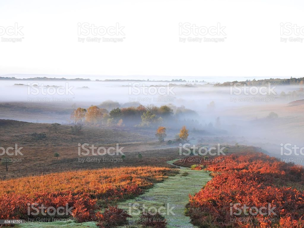 mist over path to new forest woodland autumn stock photo
