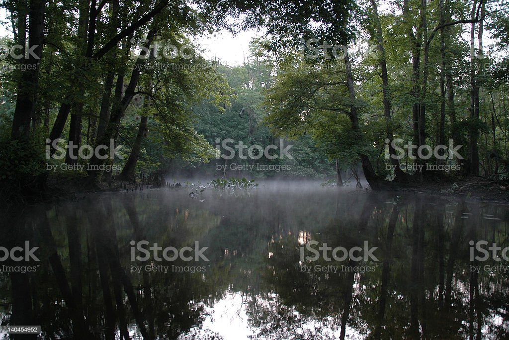 Mist over swampy river in Florida stock photo