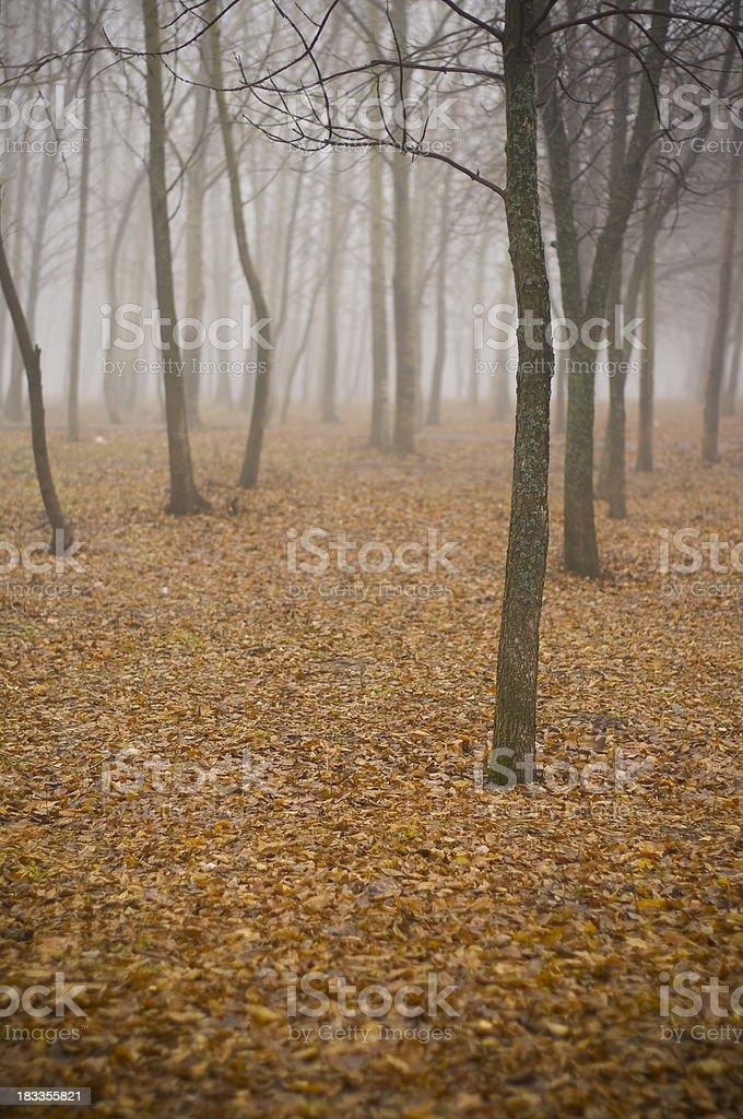 Mist royalty-free stock photo