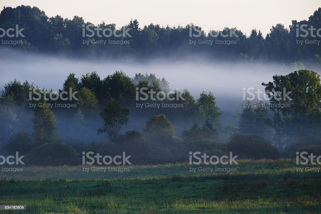 Mist rises over trees at dawn stock photo