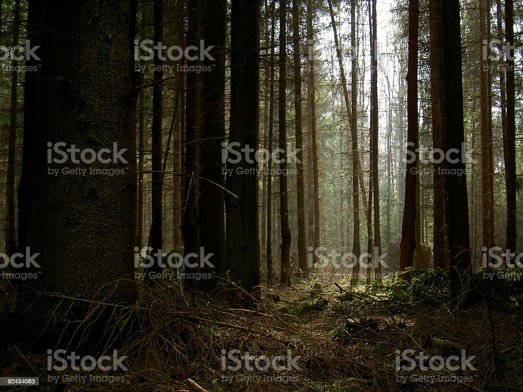 mistic forest stock photo