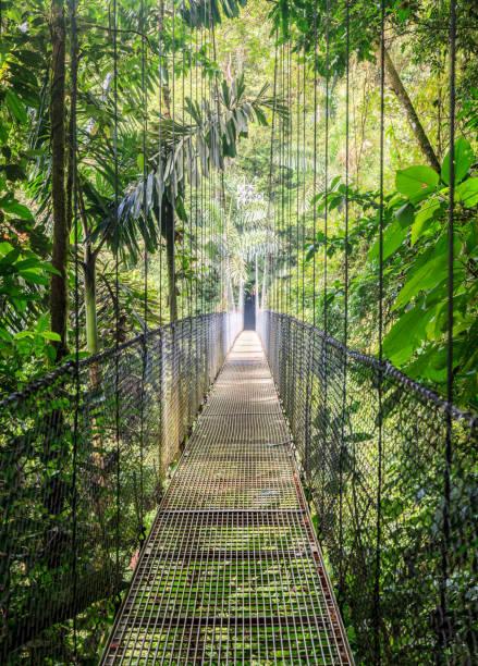 Mistico Arenal Hanging Bridges Park stock photo