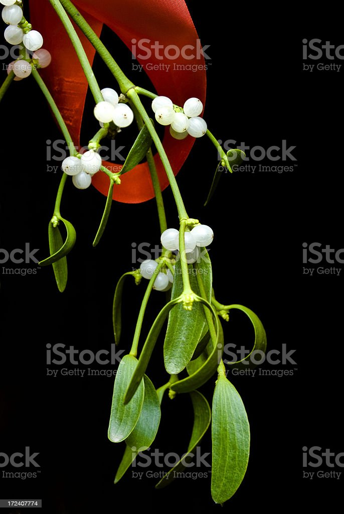Mistletoe & Red Ribbon royalty-free stock photo