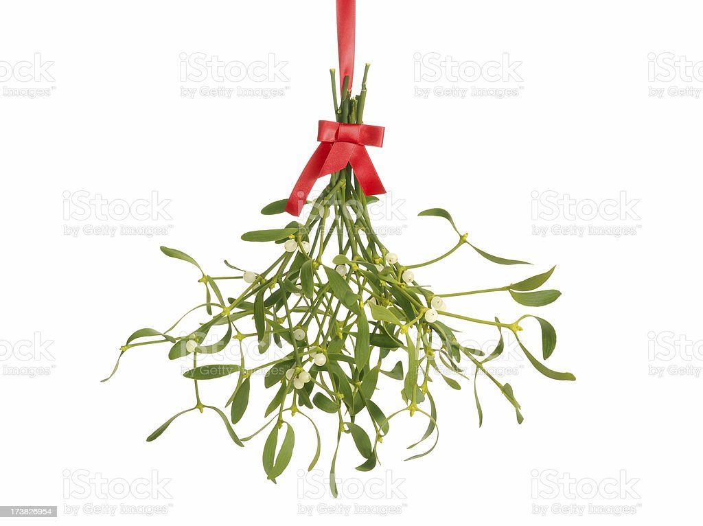 mistletoe bunch royalty-free stock photo