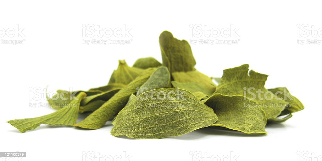 Mistletoe dried leaves stock photo