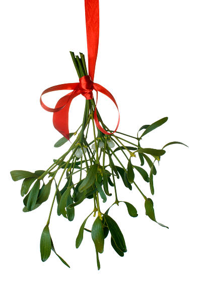 Mistletoe hanging with a red ribbon isolated on white  stock photo