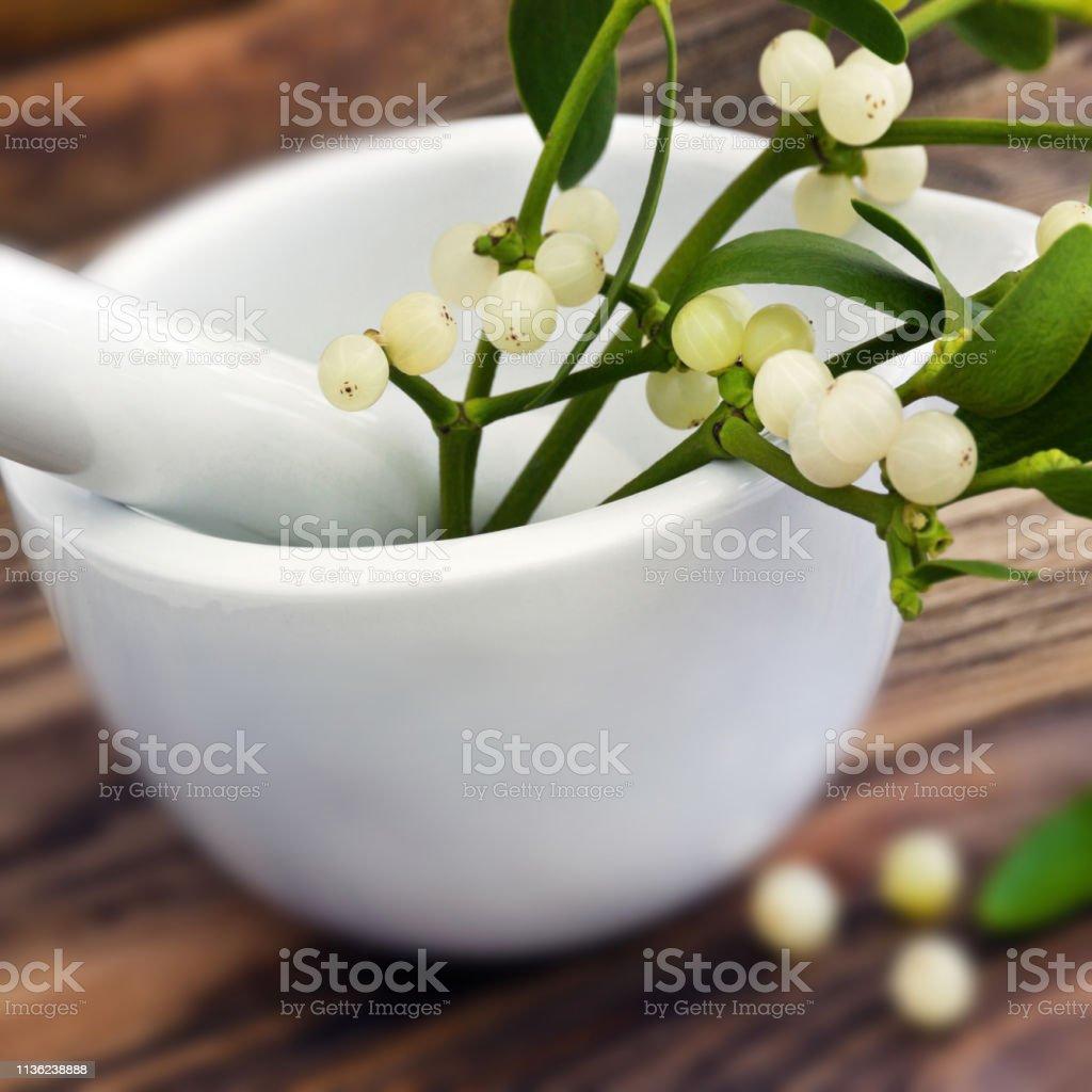 Mistletoe medical therapy background