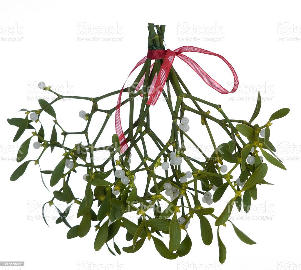 Mistletoe (Viscum album) on white background stock photo