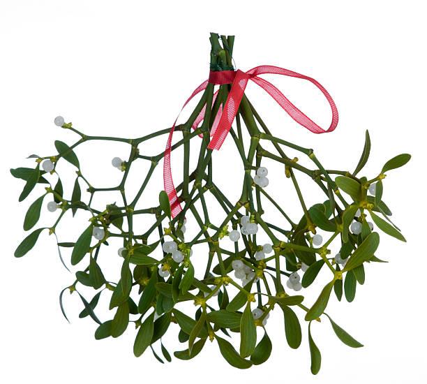 Mistletoe (Viscum album) on white background stock photo