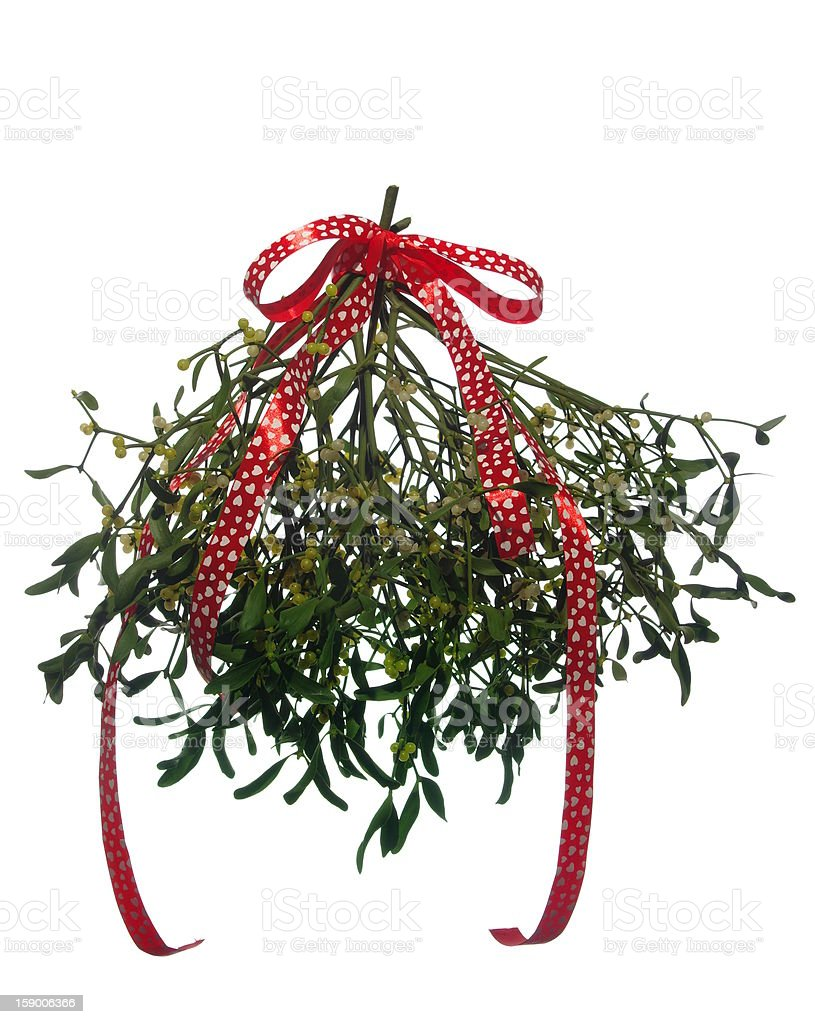 mistletoe's bunch with  red ribbon royalty-free stock photo
