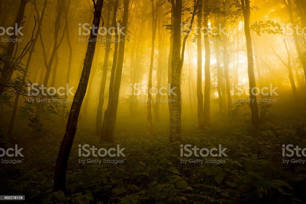 Mists stock photo
