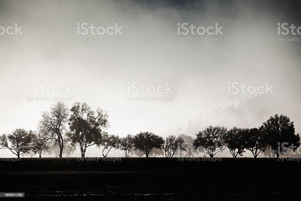 Misty autumn farm in Napa Valley, California royalty-free stock photo
