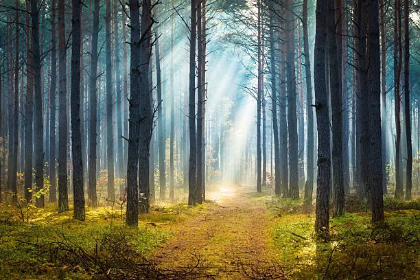Misty autumn forest - Morning Sun Beams stock photo