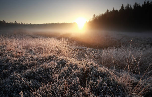 misty autumn sunrise over frosted meadow, Netherlands stock photo