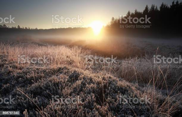 Photo of misty autumn sunrise over frosted meadow, Netherlands