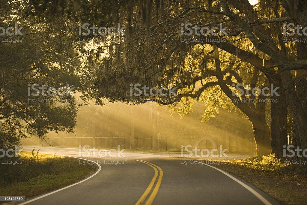 Misty bend in the road near Savannah, Georgia. royalty-free stock photo