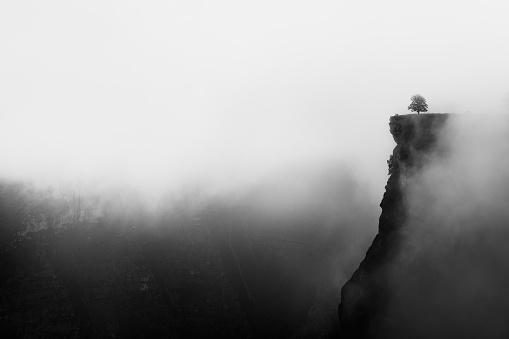 misty canyon with sharp cliff and lonely tree iin Delika