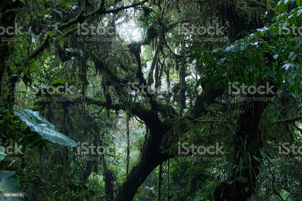 Misty cloud forest of Monteverde stock photo