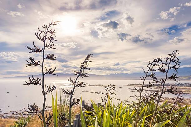 Misty coastal landscape stock photo