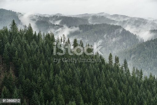 Douglas Fir forests over a mountain range vista interspersed with fog
