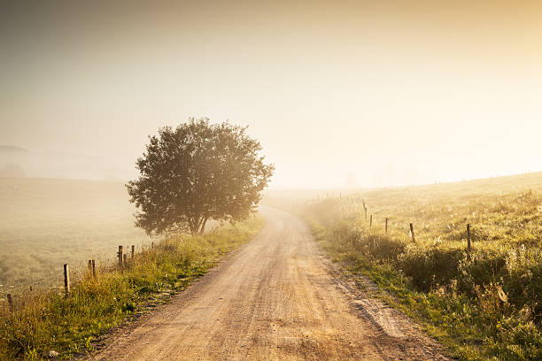 Misty Contry Road in Farmland - Fields, Meadows and Tree stock photo