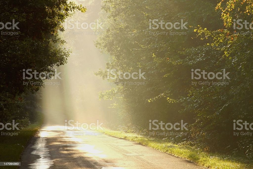 Misty country road at dawn royalty-free stock photo