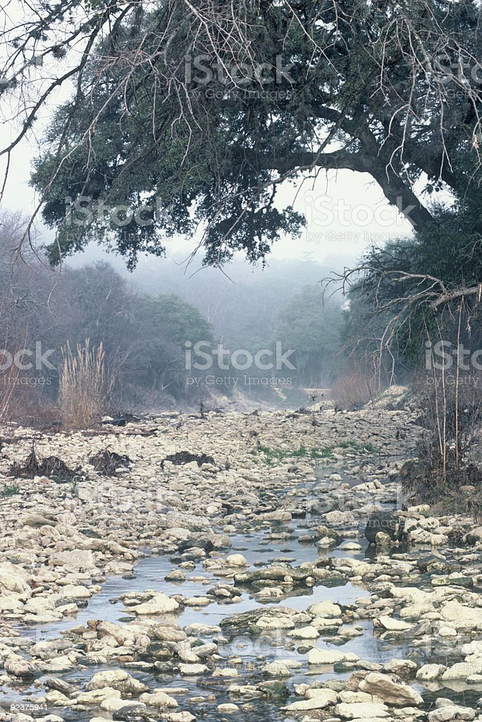 Misty creek bed and overhanging oak tree royalty-free stock photo