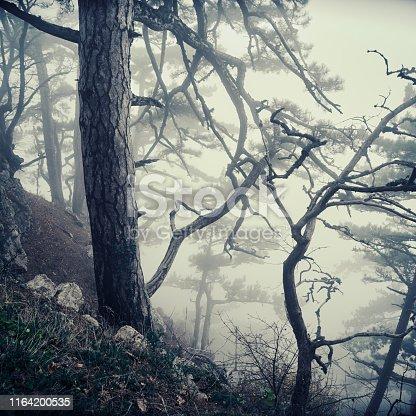 Misty dark naked trees in fog, mountain slope