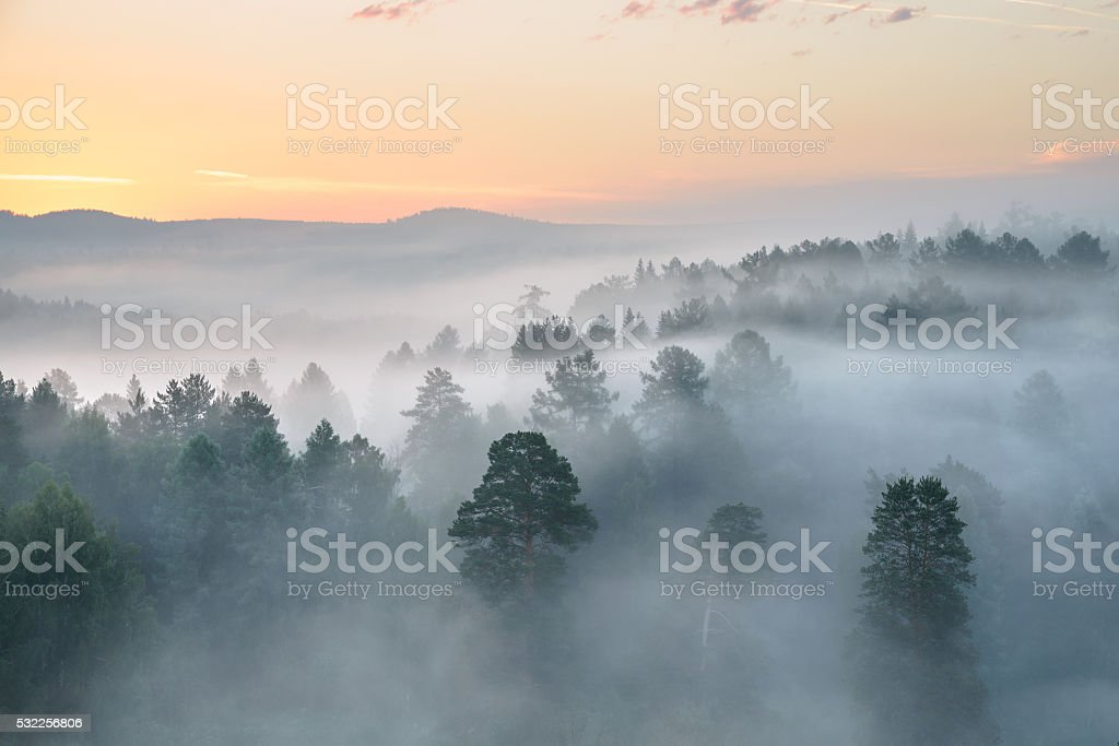 misty dawn in the national park deer streams