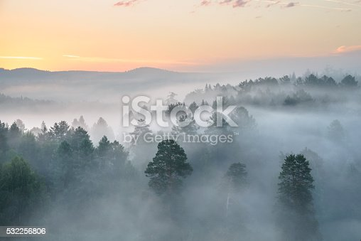 istock misty dawn in the national park deer streams 532256806