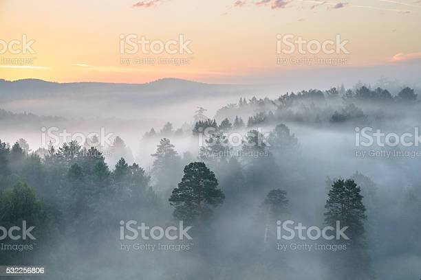 Photo of misty dawn in the national park deer streams