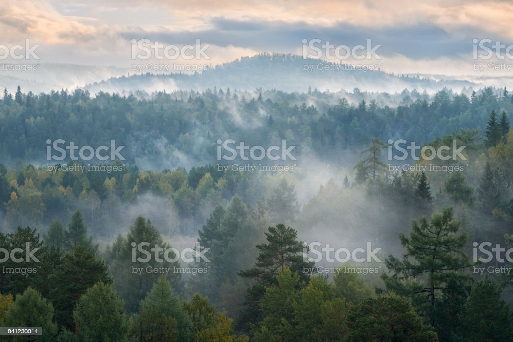 misty dawn in the national park deer streams stock photo