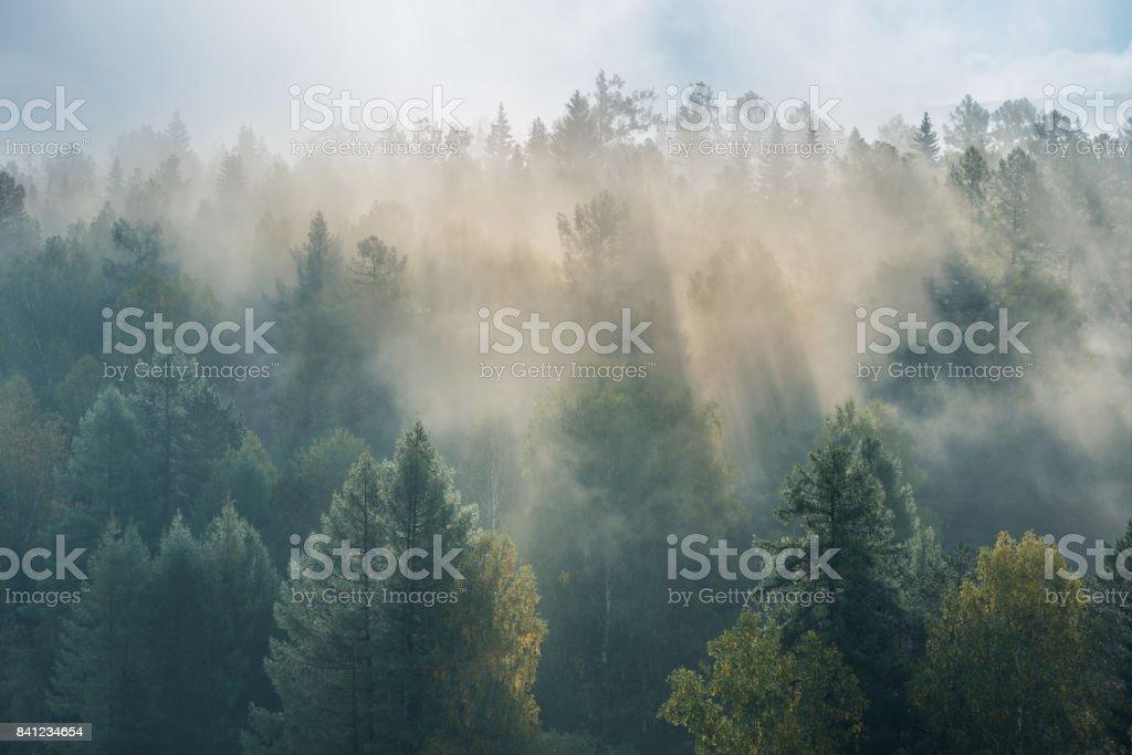 enevoado amanhecer no Parque Nacional deer Rios foto de stock royalty-free