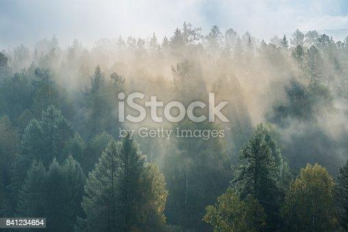 istock misty dawn in the national park deer streams 841234654