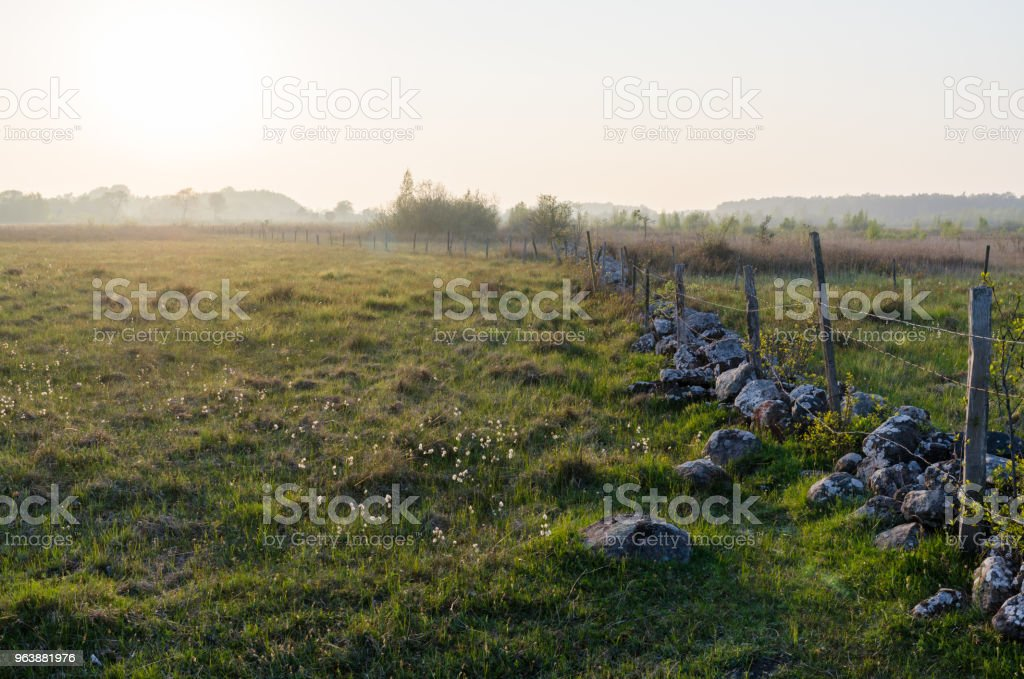 Misty evening in a beautiful  pastureland - Royalty-free Agricultural Field Stock Photo