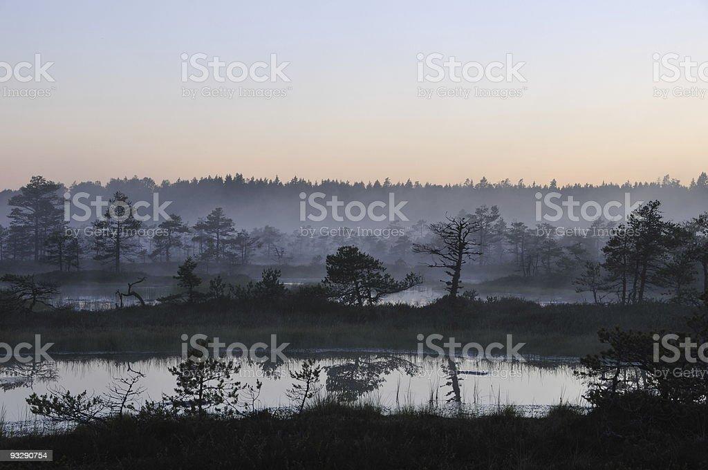 Misty evening in Kakerdaja Bog royalty-free stock photo