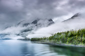 Heavy mist over a fjord shoreline forest area.