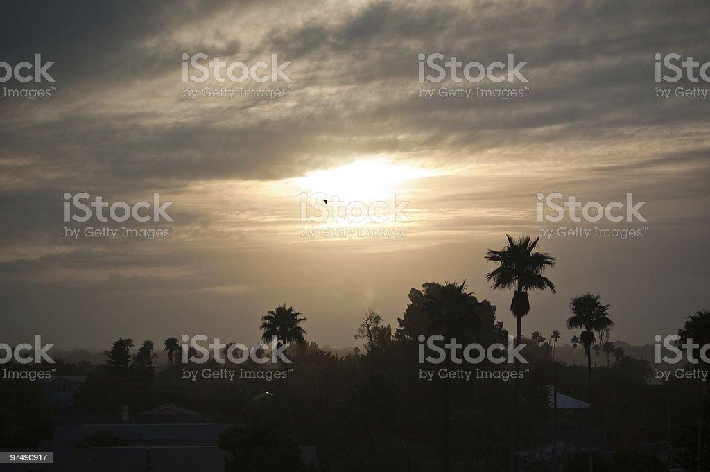Misty Florida Morning royalty-free stock photo