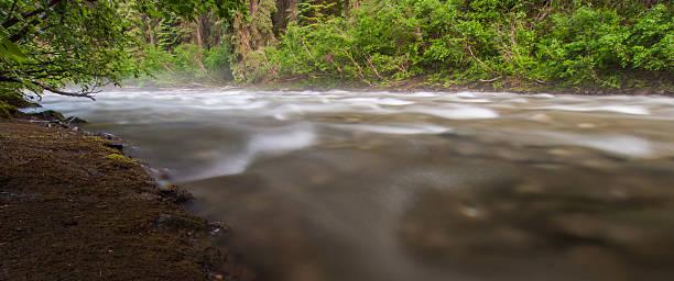 Misty Flowing Creek stock photo