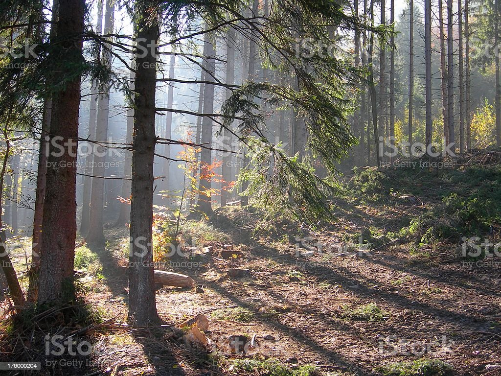 Misty Forest 03 royalty-free stock photo