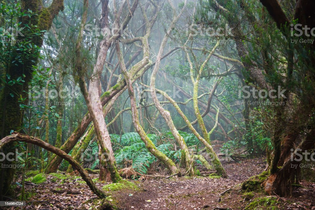 Misty Forest And Path royalty-free stock photo