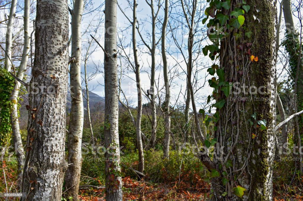 Misty forest at springtime, trees, plant and fern under the blue sky stock photo