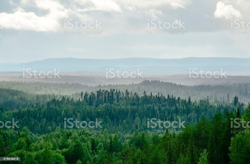 Misty forest paisaje foto de stock libre de derechos