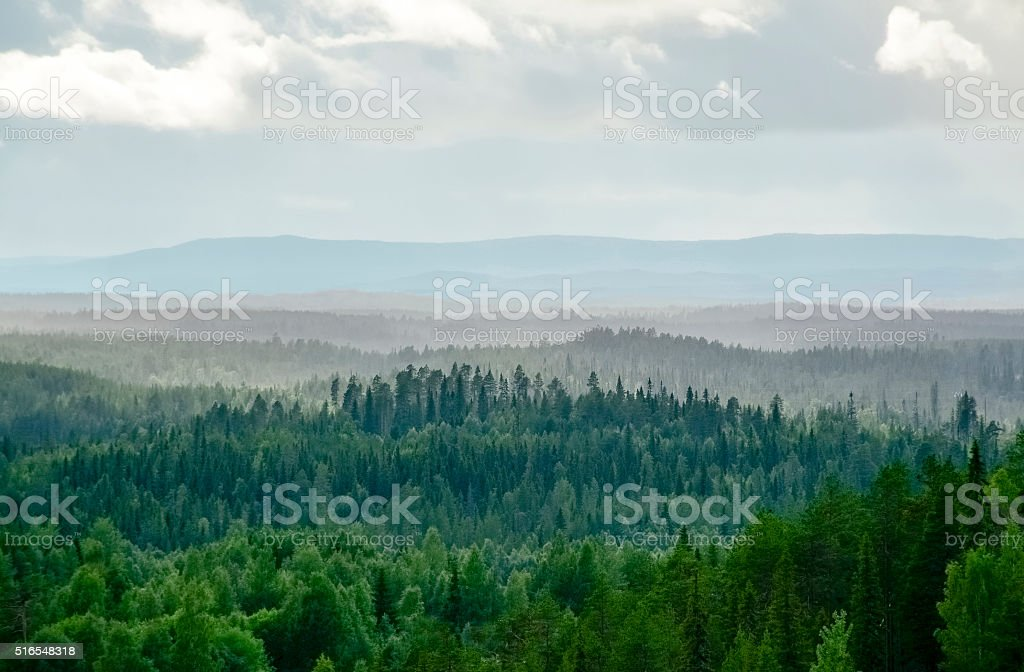 Misty forest paisaje - foto de stock