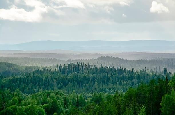 misty forest landscape - kuzey ülkeleri stok fotoğraflar ve resimler