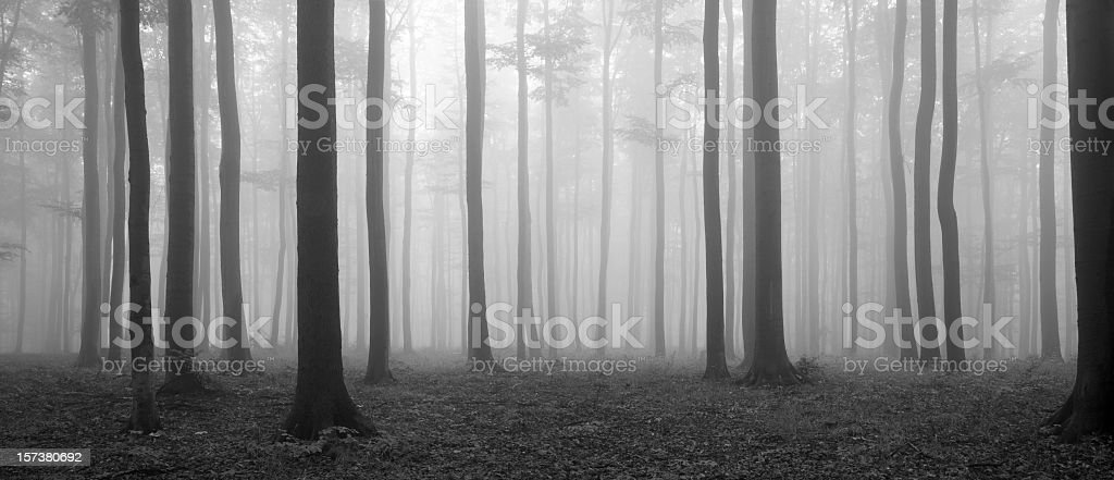 Misty Forest – Foto