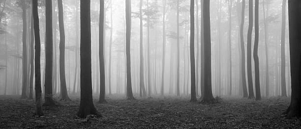 misty forest - harz stock-fotos und bilder