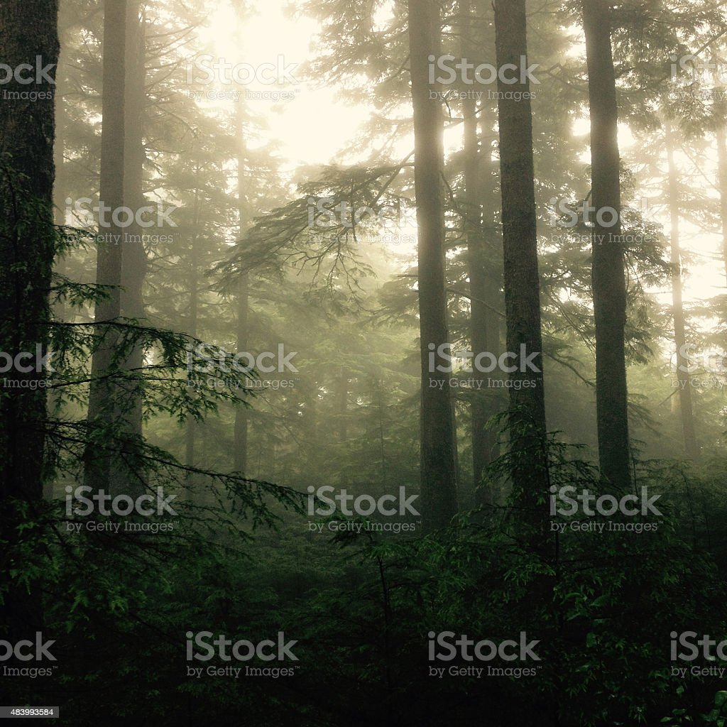 Misty Forest - Royalty-free 2015 Stock Photo